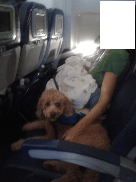 Flying with a Service Animal